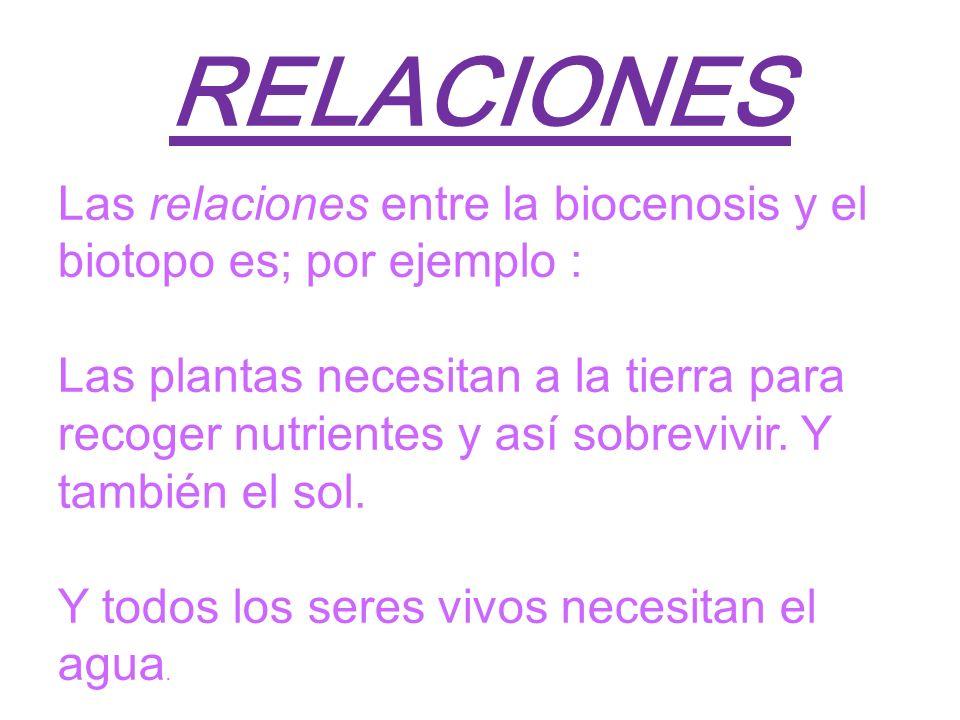 RELACIONES Las relaciones entre la biocenosis y el biotopo es; por ejemplo : Las plantas necesitan a la tierra para recoger nutrientes y así sobrevivi