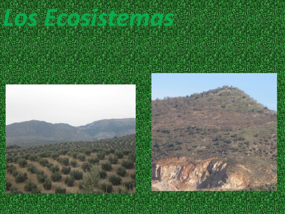 El biotopo El biotopo de nuestro ecosistema está formado por: la tierra, la temperatura, el aire, el agua, el cielo, las hojas, las casas del pueblo…