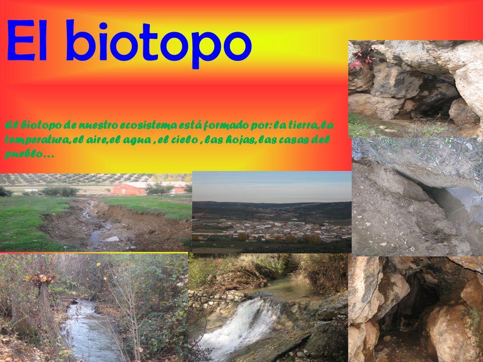 La Biocenosis La biocenosis de este ecosistema es bastante variada.