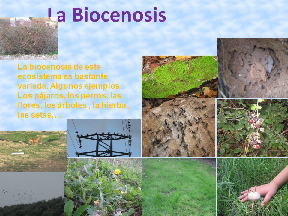 La Biocenosis La biocenosis de este ecosistema es bastante variada. Algunos ejemplos : Los pájaros, los perros, las flores, los árboles, la hierba, la