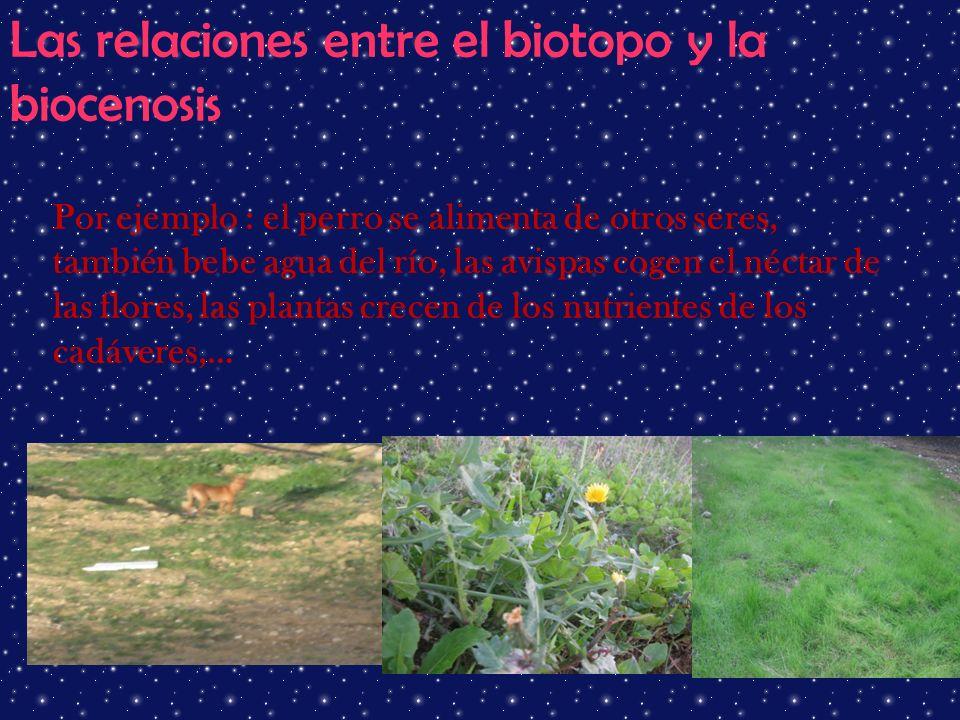 Las relaciones entre el biotopo y la biocenosis Por ejemplo : el perro se alimenta de otros seres, también bebe agua del río, las avispas cogen el néc