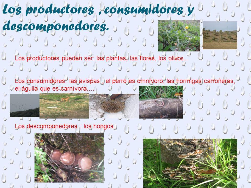 Los productores, consumidores y descomponedores. Los productores pueden ser: las plantas, las flores, los olivo s… Los consumidores: las avispas, el p