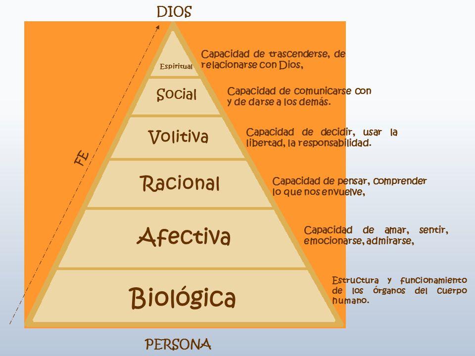 Espiritual Social Volitiva Racional Afectiva Biológica DIOS PERSONA FE Capacidad de trascenderse, de relacionarse con Dios, Capacidad de comunicarse c