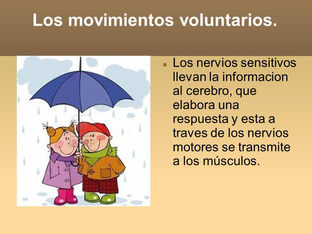 Los movimientos voluntarios.