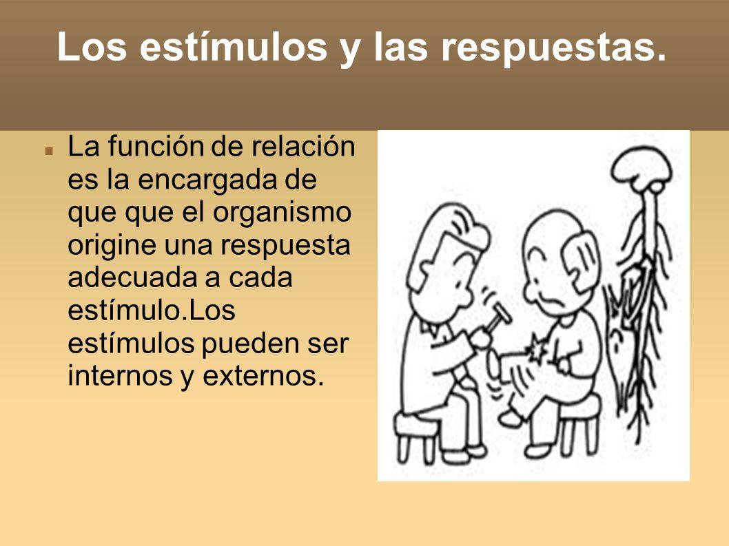 Los receptores e estímulos.Los receptores de estímulos pueden ser internos o externos.