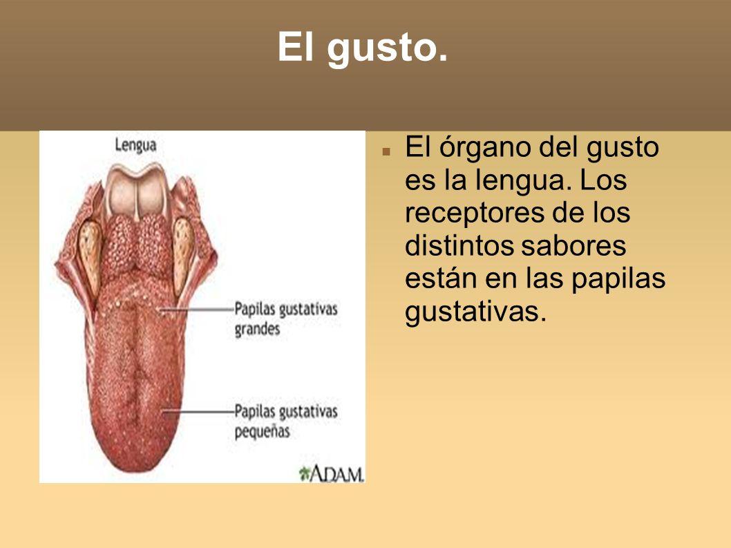 El gusto.El órgano del gusto es la lengua.