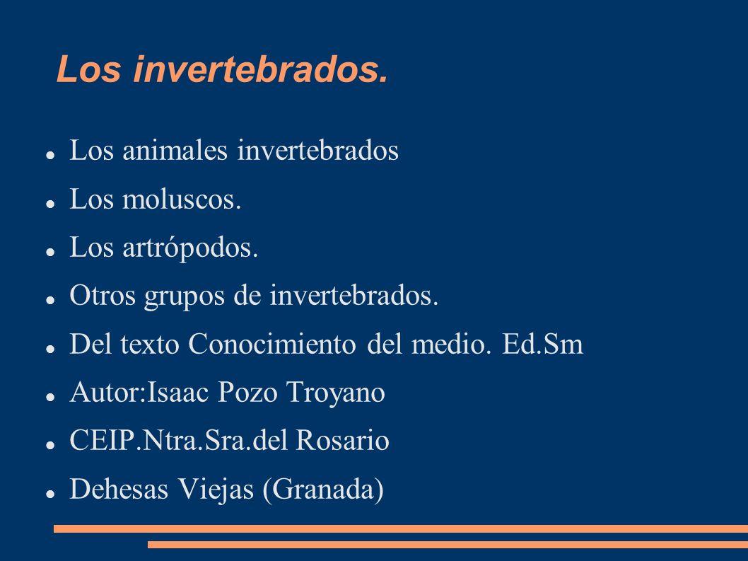 Los invertebrados. Los animales invertebrados Los moluscos. Los artrópodos. Otros grupos de invertebrados. Del texto Conocimiento del medio. Ed.Sm Aut