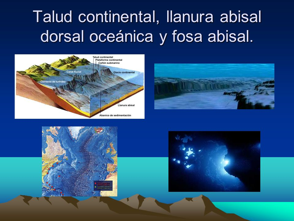 Talud continental, llanura abisal dorsal oceánica y fosa abisal.