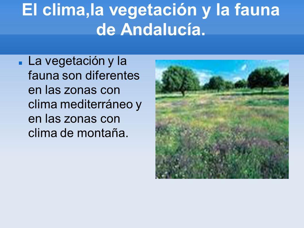 El clima,la vegetación y la fauna de Andalucía. La vegetación y la fauna son diferentes en las zonas con clima mediterráneo y en las zonas con clima d