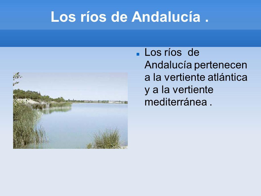 Los ríos de Andalucía. Los ríos de Andalucía pertenecen a la vertiente atlántica y a la vertiente mediterránea.