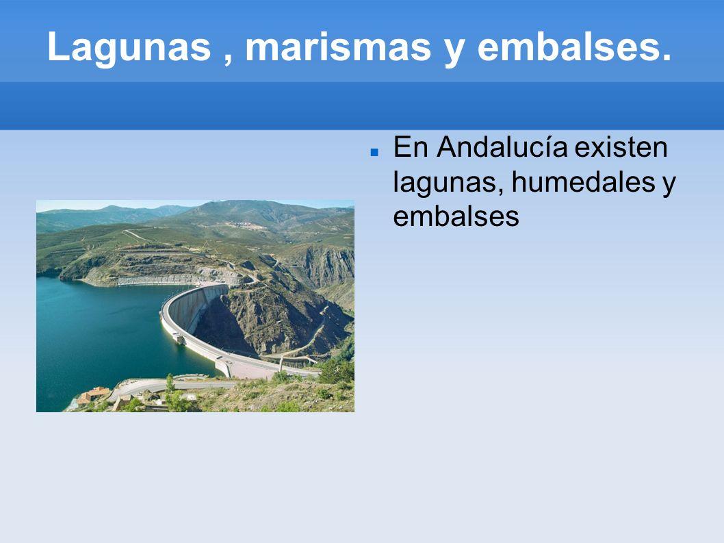 Lagunas, marismas y embalses. En Andalucía existen lagunas, humedales y embalses