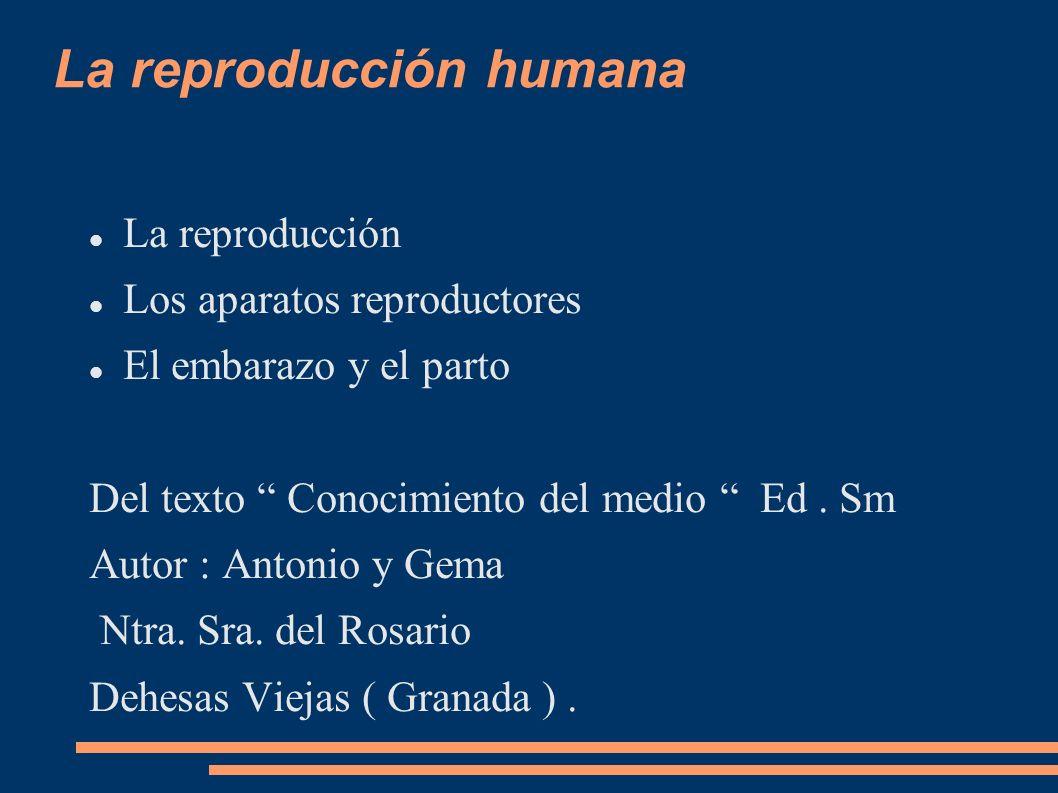 La reproducción humana La reproducción Los aparatos reproductores El embarazo y el parto Del texto Conocimiento del medio Ed. Sm Autor : Antonio y Gem