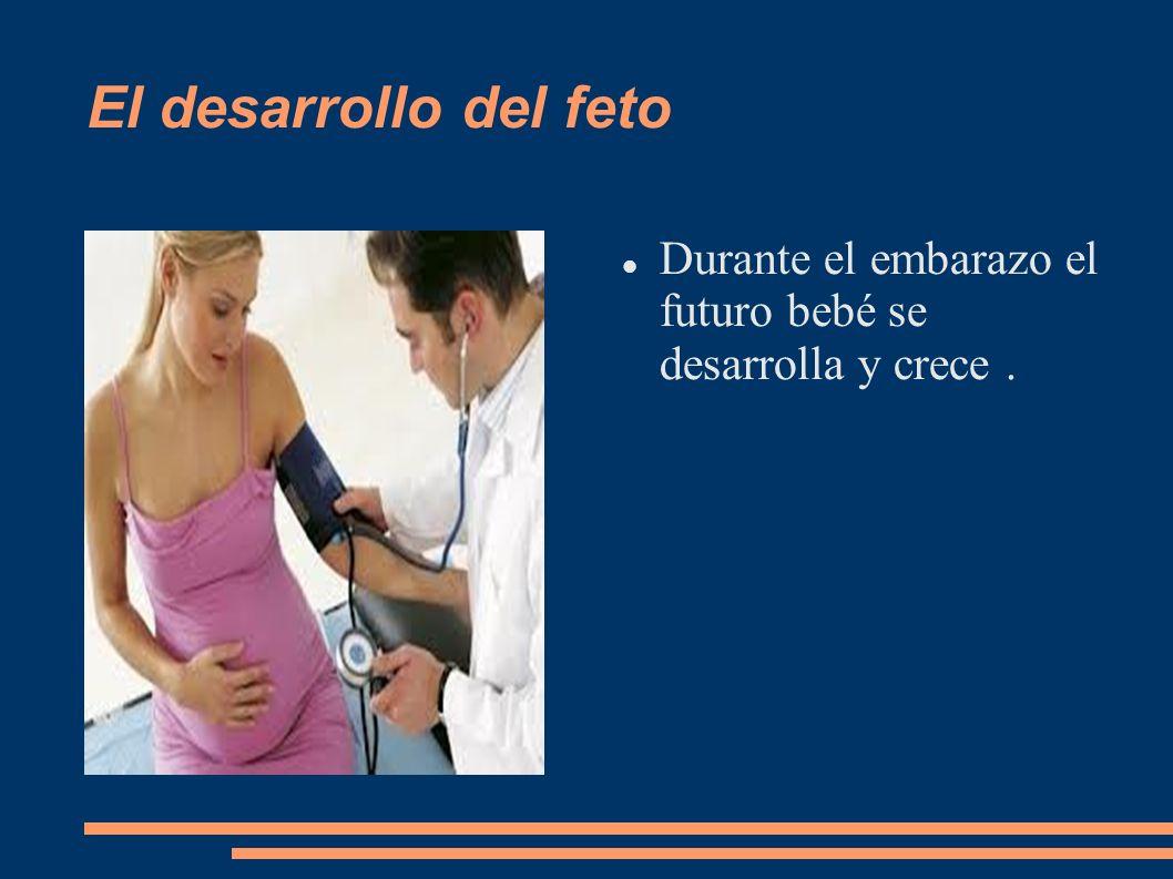 El desarrollo del feto Durante el embarazo el futuro bebé se desarrolla y crece.