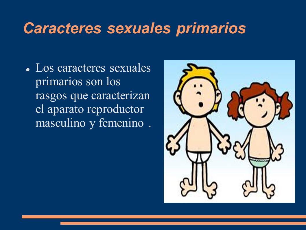 Caracteres sexuales secundarios Los caracteres sexuales secundarios se desarrollan en la pubertad.