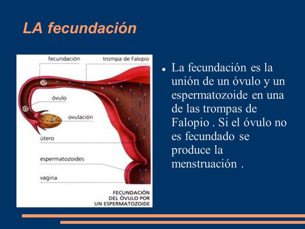 LA fecundación La fecundación es la unión de un óvulo y un espermatozoide en una de las trompas de Falopio. Si el óvulo no es fecundado se produce la