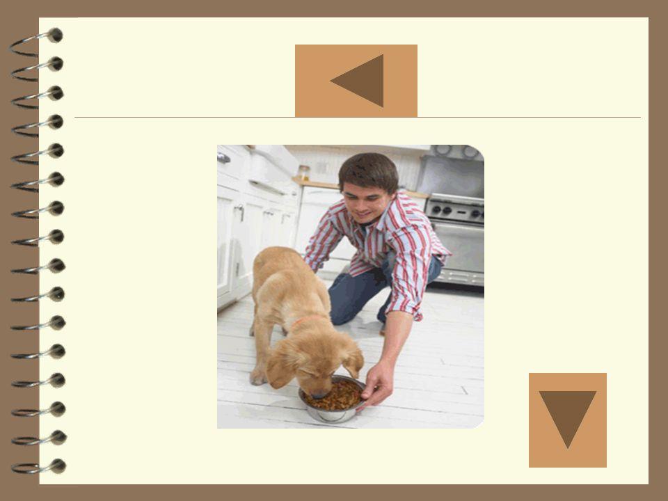 Dar de comer al perro Mostrar la foto seis