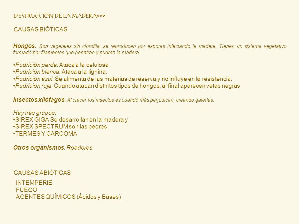 DESTRUCCIÓN DE LA MADERA CAUSAS BIÓTICAS Hongos: Son vegetales sin clorofila, se reproducen por esporas infectando la madera. Tienen un sistema vegeta
