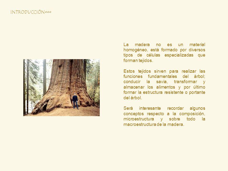 La madera no es un material homogéneo, está formado por diversos tipos de células especializadas que forman tejidos. Estos tejidos sirven para realiza