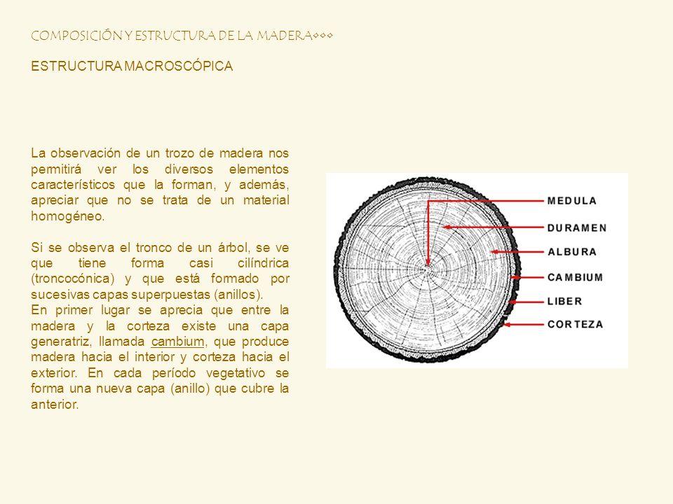 COMPOSICIÓN Y ESTRUCTURA DE LA MADERA ESTRUCTURA MACROSCÓPICA La observación de un trozo de madera nos permitirá ver los diversos elementos caracterís