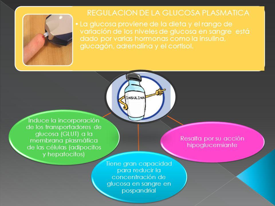 REGULACION DE LA GLUCOSA PLASMATICA La glucosa proviene de la dieta y el rango de variación de los niveles de glucosa en sangre está dado por varias h