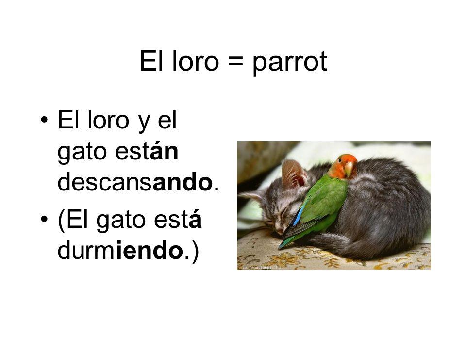 El loro = parrot El loro y el gato están descansando. (El gato está durmiendo.)