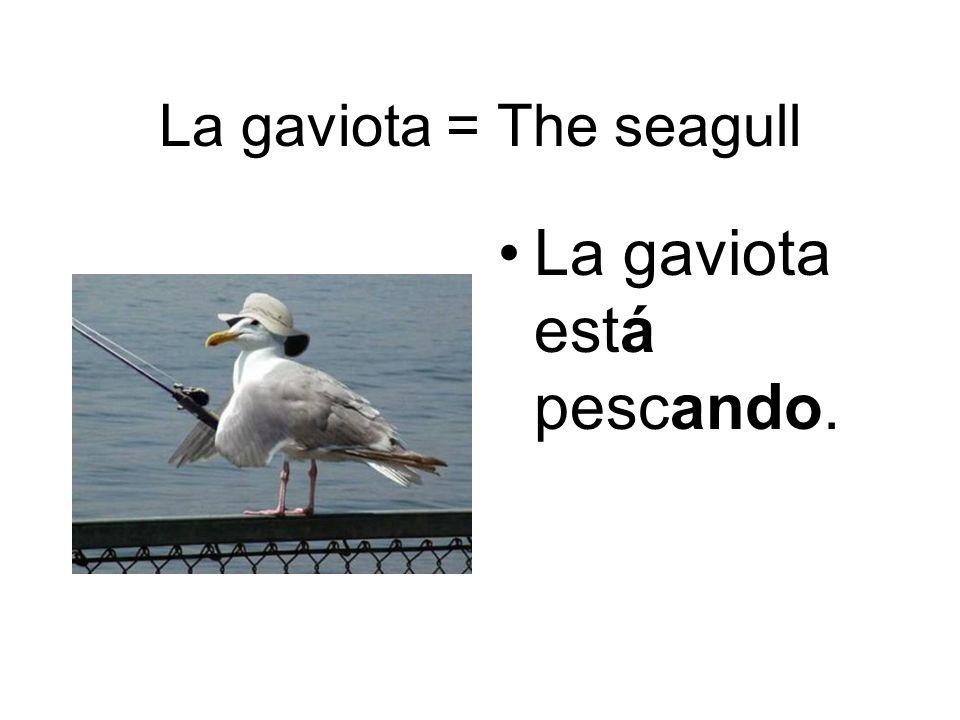 La gaviota = The seagull La gaviota está pescando.