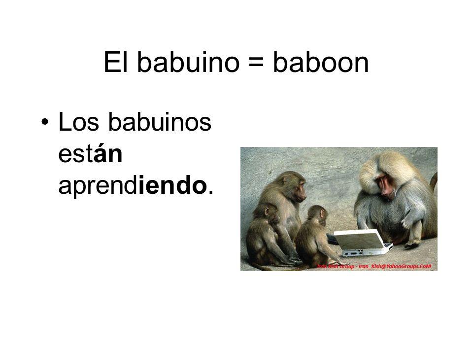 El babuino = baboon Los babuinos están aprendiendo.