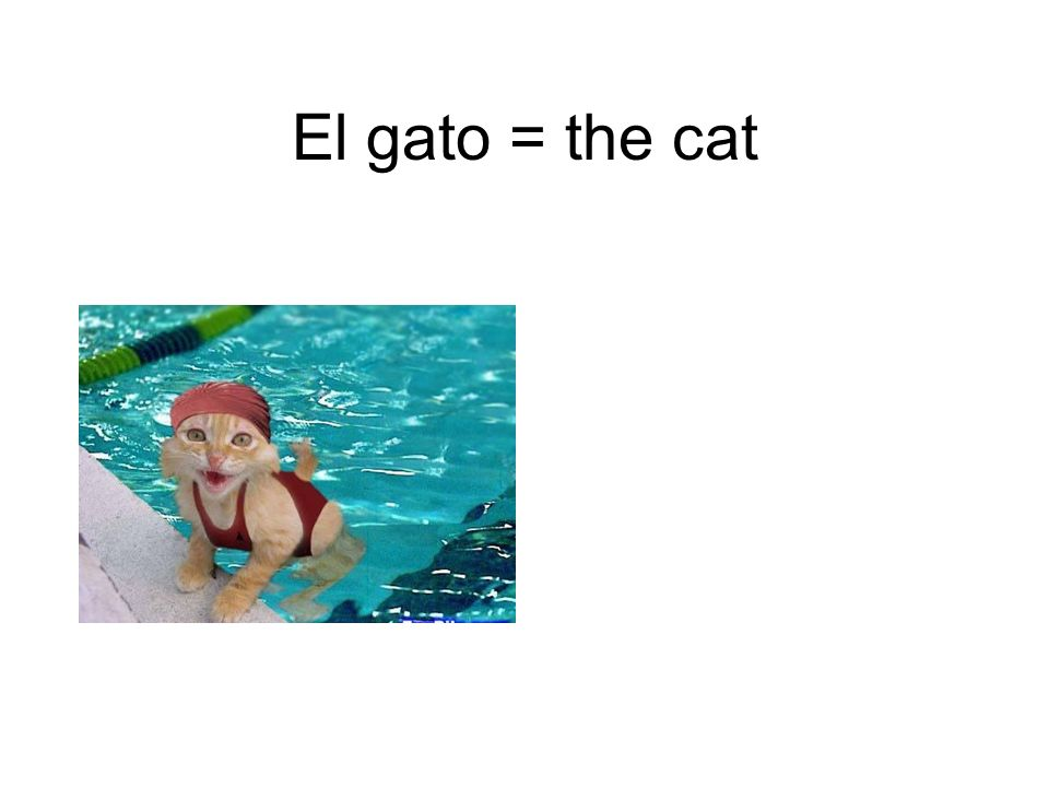 El gato = the cat