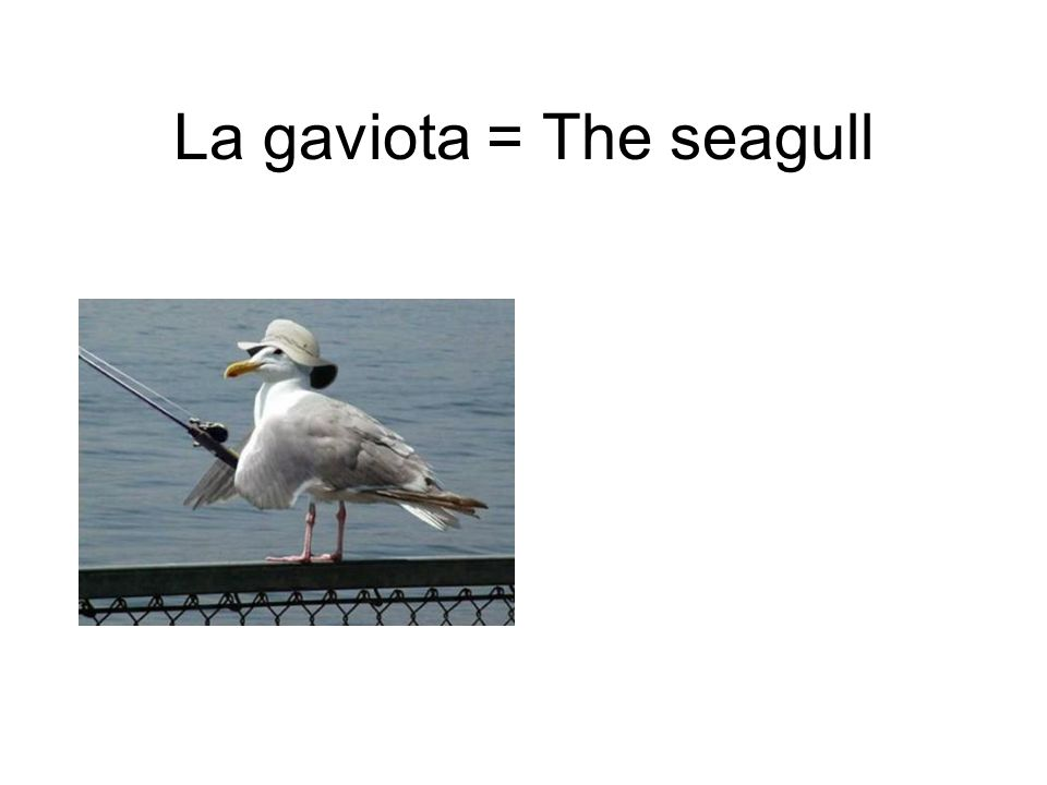 La gaviota = The seagull