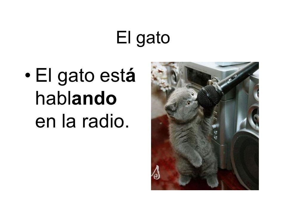 El gato El gato está hablando en la radio.