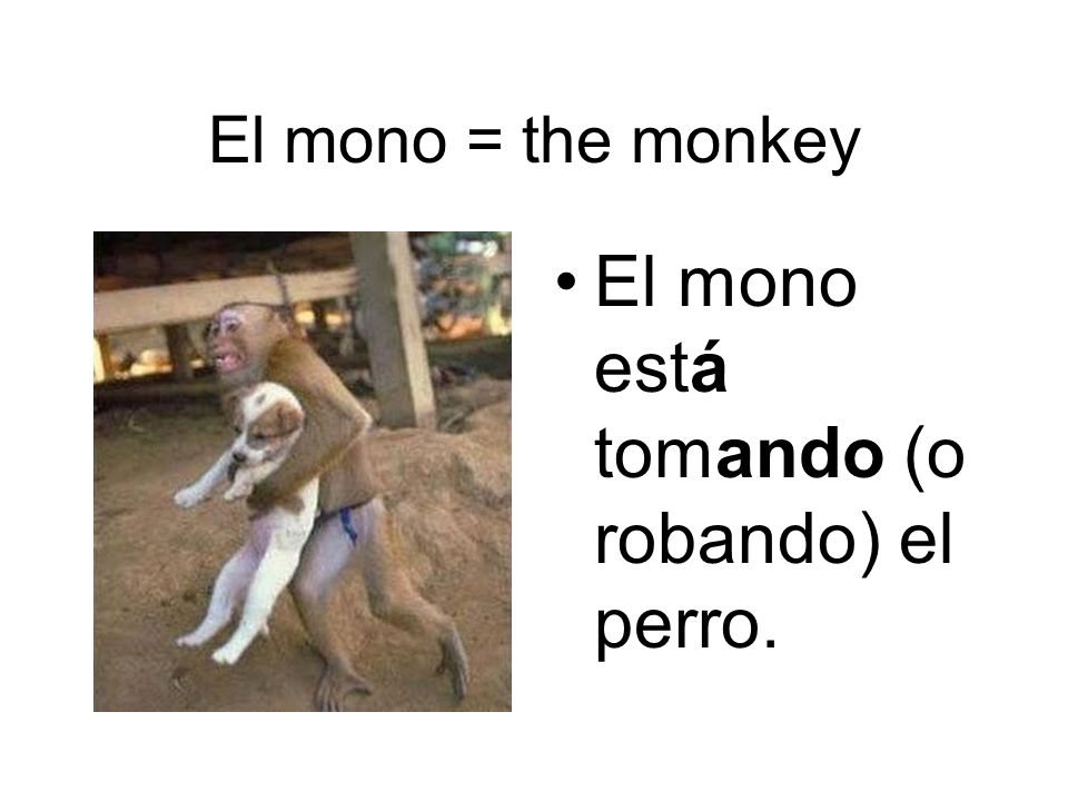 El mono = the monkey El mono está tomando (o robando) el perro.