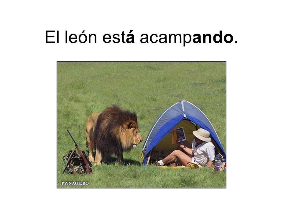 El león está acampando.