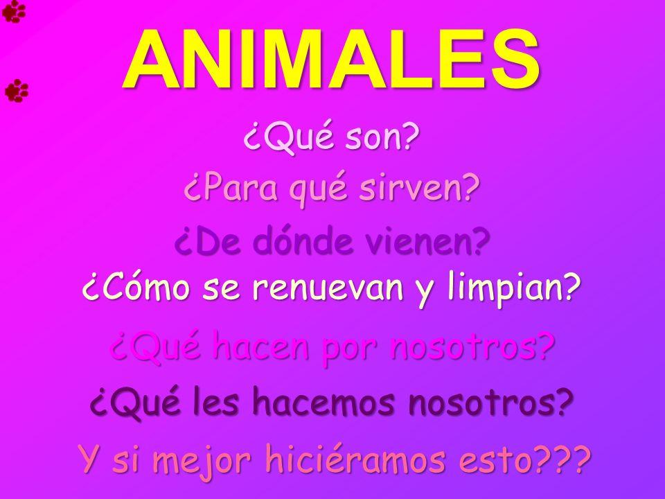 ANIMALES ¿Qué son? ¿Qué son? ¿Para qué sirven? ¿Para qué sirven? ¿Cómo se renuevan y limpian? ¿Cómo se renuevan y limpian? ¿De dónde vienen? ¿De dónde