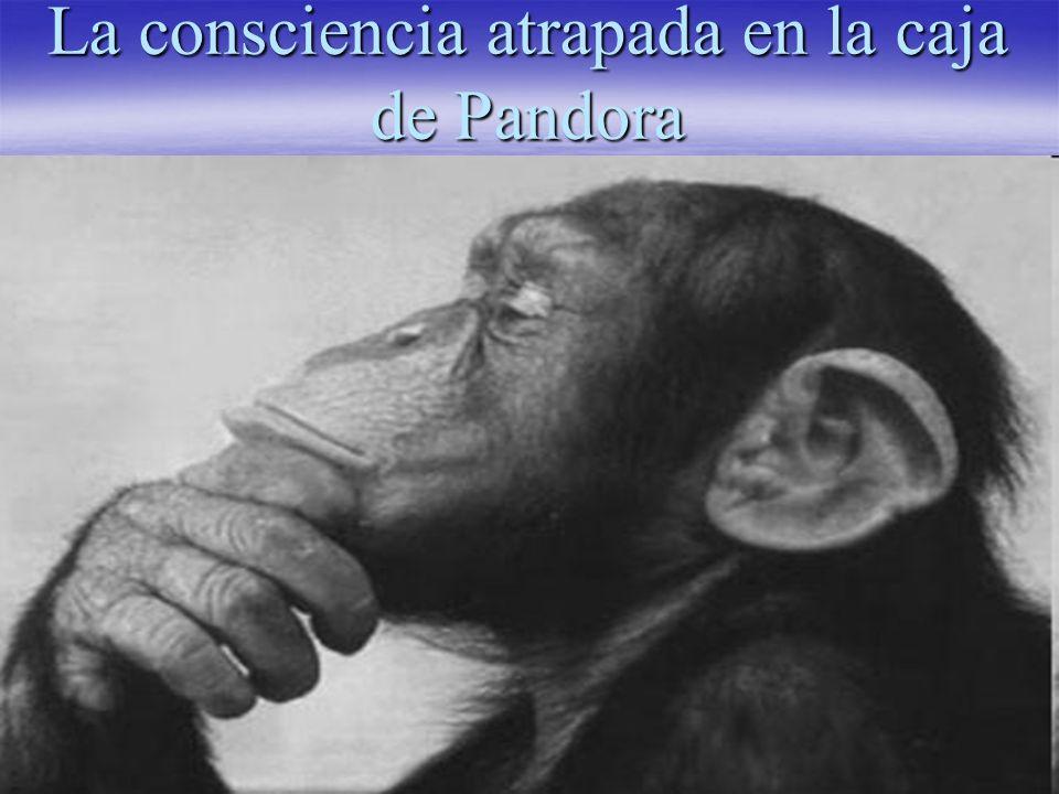 La consciencia como el rasgo más fundamental del ser humano, nos permite darnos cuenta de algo.