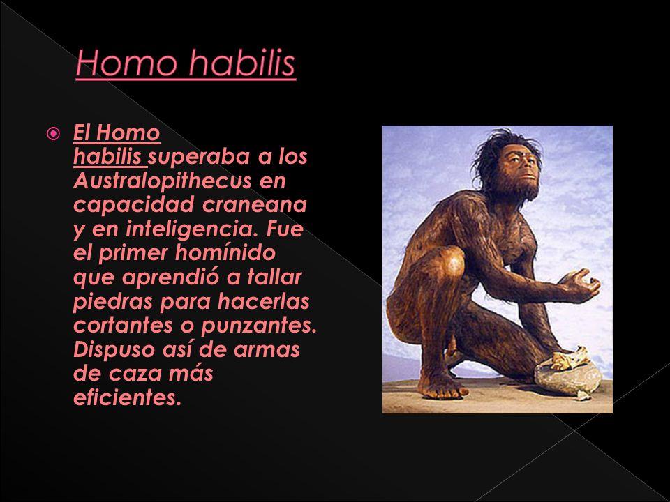 Homo erectus se llama a la especie humana que vivió en Asia entre 1,8 millones de años y 300 mil años atrás.
