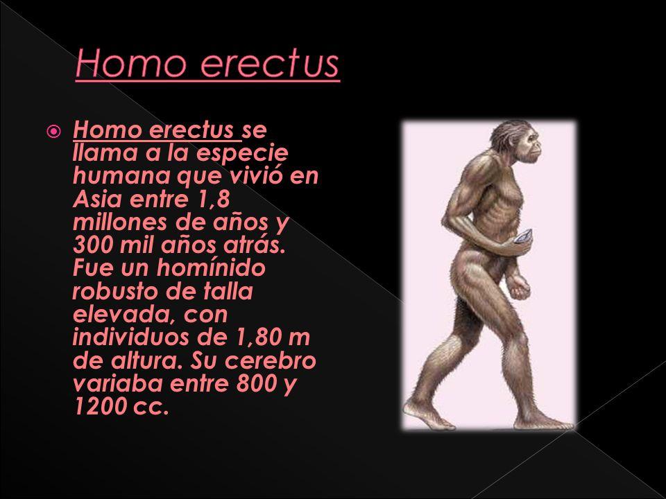 Homo antecessor es considerada la especie homínida más antigua de Europa.