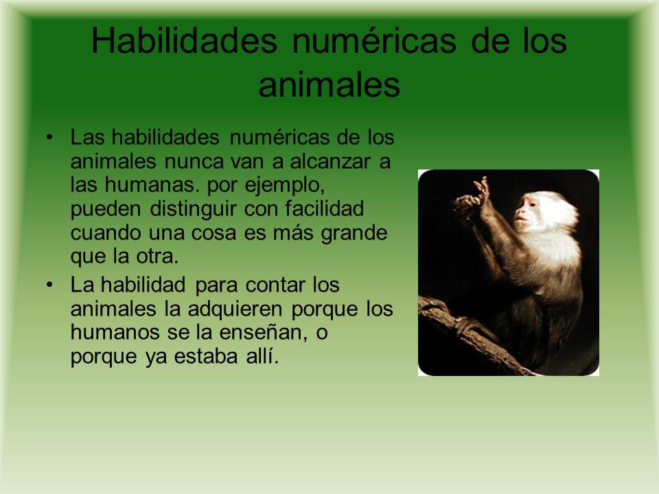 Habilidades numéricas de los animales Las habilidades numéricas de los animales nunca van a alcanzar a las humanas.