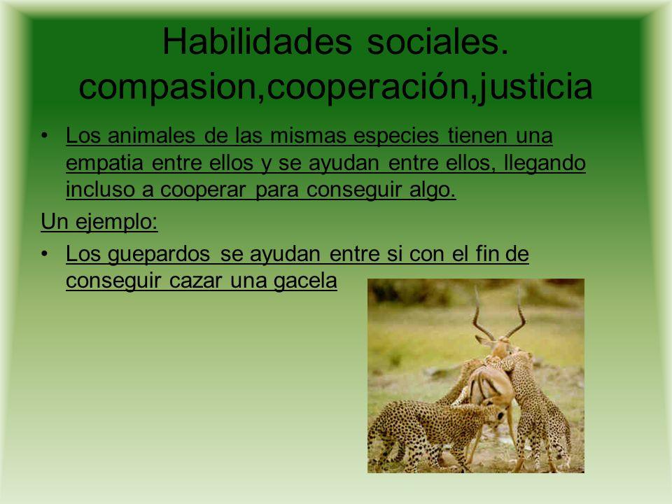 Limites de la inteligencia animal Hasta ahora, todo comportamiento animal ha sido atribuido al instinto.