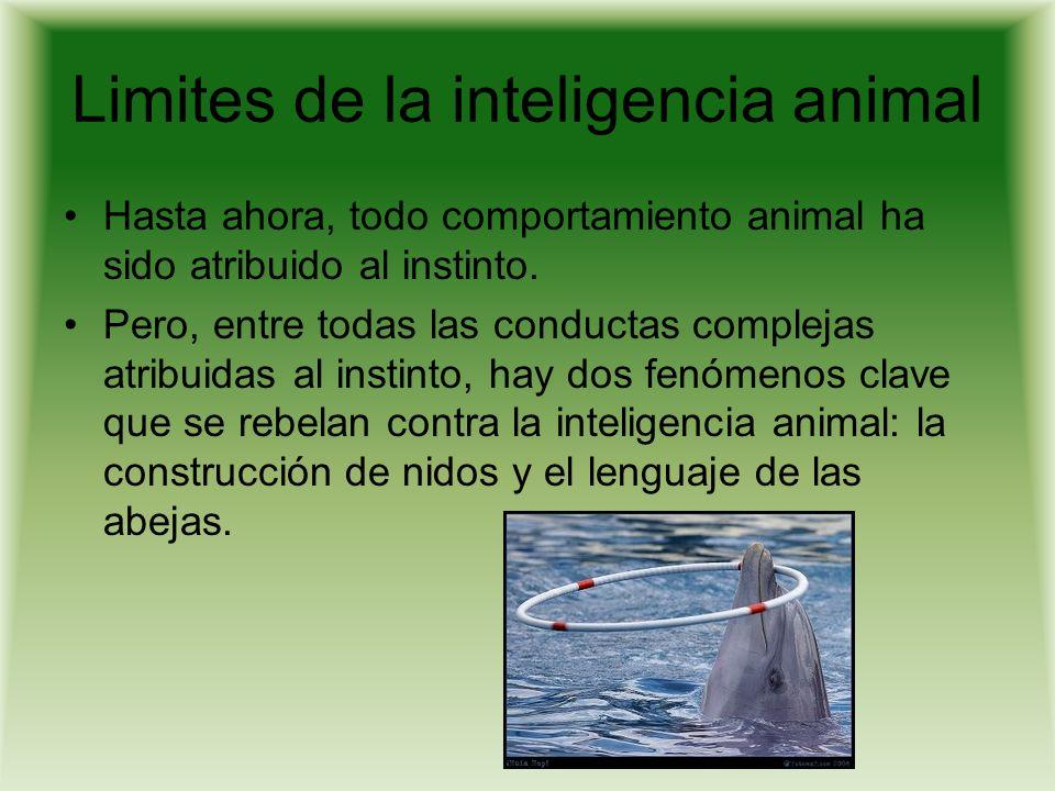 Conclusiones practicas, los derechos de los animales La suposición de que los animales no pueden poseer derechos porque no tienen capacidades como racionamiento, lenguaje o conciencia.