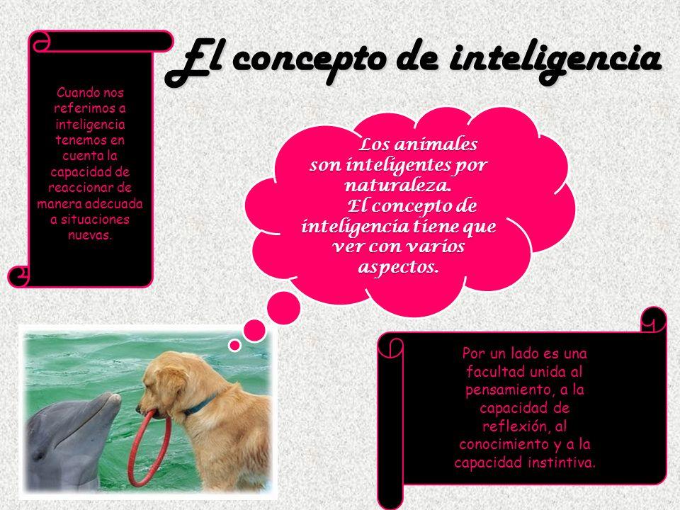 Cuando nos referimos a inteligencia tenemos en cuenta la capacidad de reaccionar de manera adecuada a situaciones nuevas. Los animales son inteligente