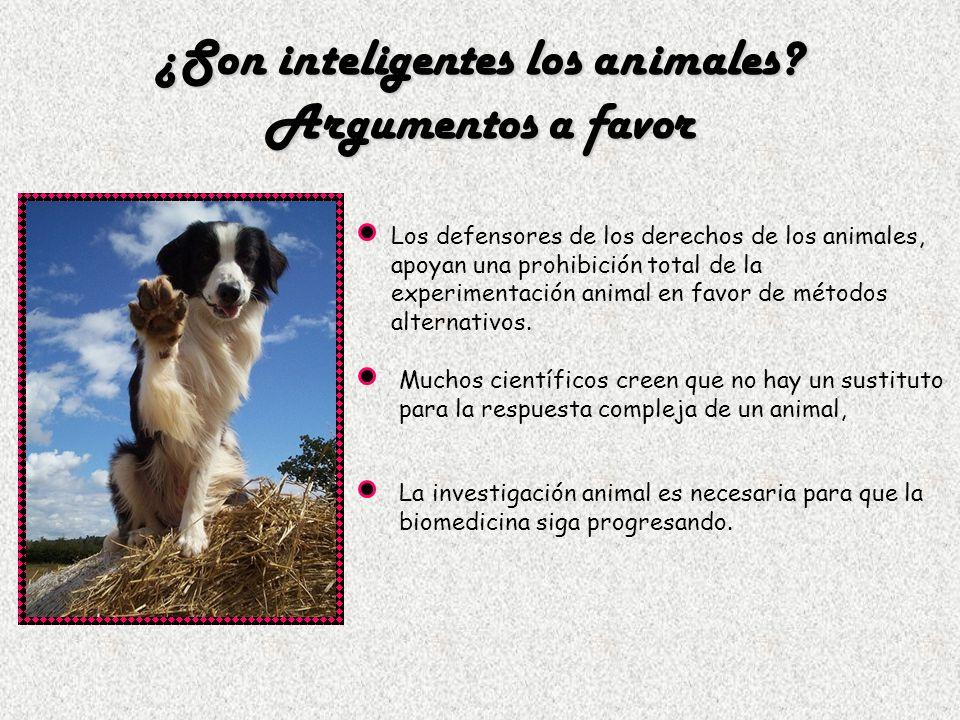 ¿Son inteligentes los animales? Argumentos a favor Los defensores de los derechos de los animales, apoyan una prohibición total de la experimentación