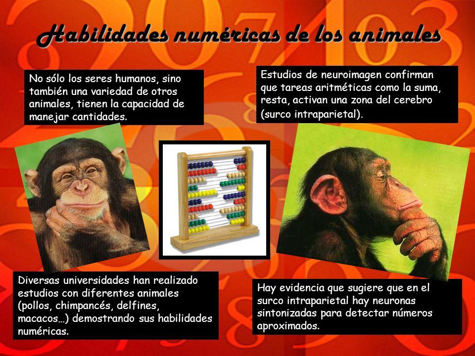 Habilidades numéricas de los animales No sólo los seres humanos, sino también una variedad de otros animales, tienen la capacidad de manejar cantidade