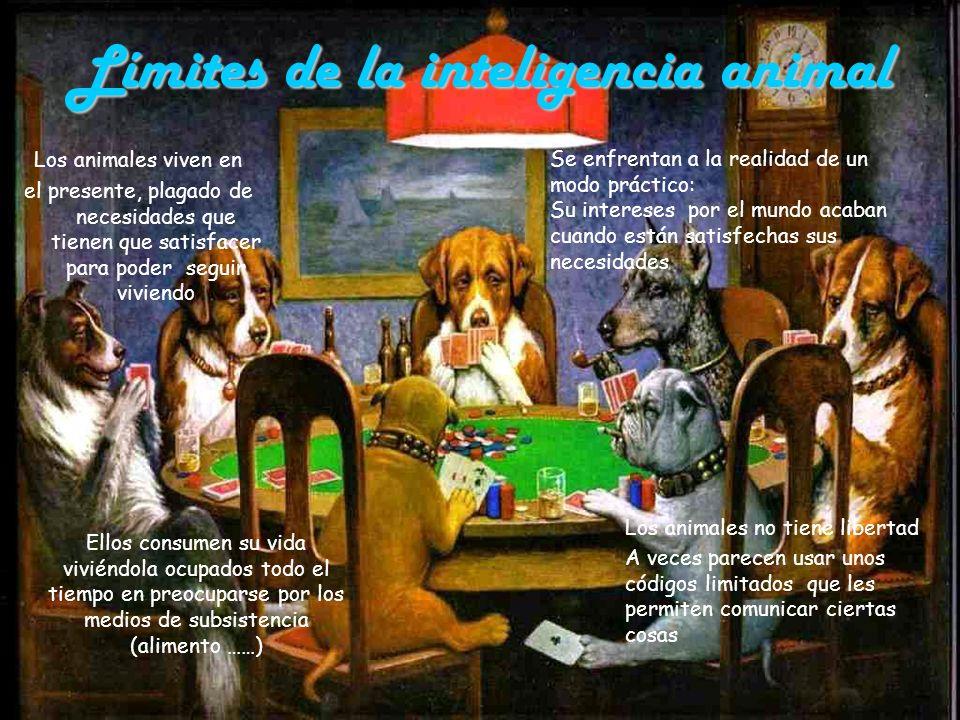 Límites de la inteligencia animal Ellos consumen su vida viviéndola ocupados todo el tiempo en preocuparse por los medios de subsistencia (alimento ……