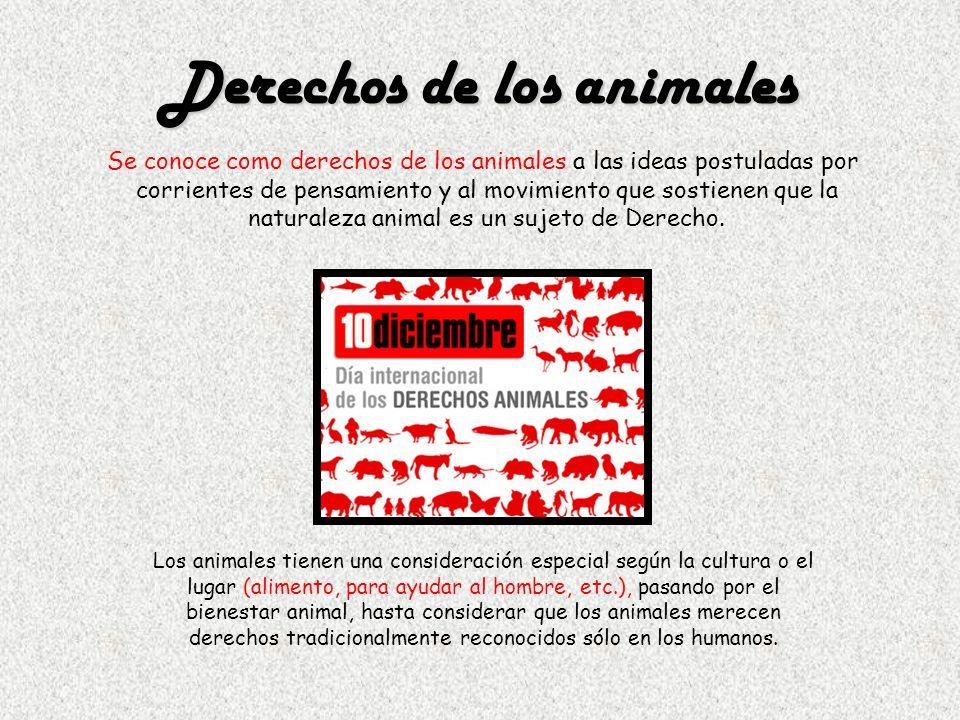 Derechos de los animales Se conoce como derechos de los animales a las ideas postuladas por corrientes de pensamiento y al movimiento que sostienen qu