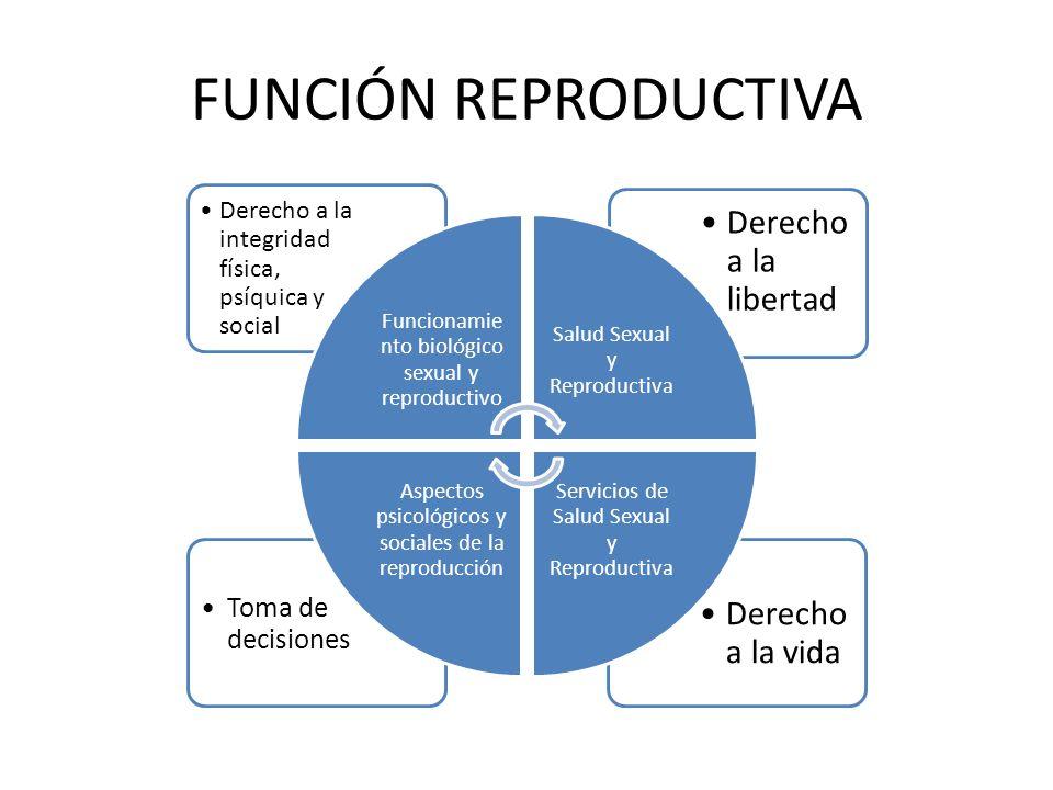 FUNCIÓN REPRODUCTIVA Derecho a la vida Toma de decisiones Derecho a la libertad Derecho a la integridad física, psíquica y social Funcionamie nto biol