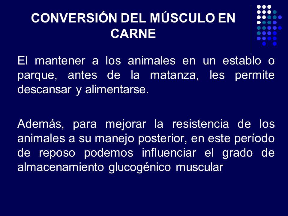 CONVERSIÓN DEL MÚSCULO EN CARNE Los piensos amiláceos, y especialmente el azúcar, restauran los niveles glucogénicos musculares permitiendo de esta forma el desarrollo de un pH postmortal normal.