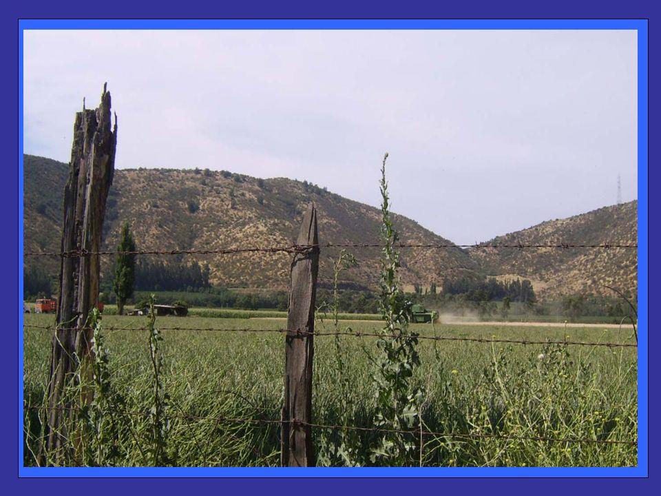 Aquí hay un riesgo importante para nuestra Comuna En el año 2002 se Inserta en esta zona un Nuevo Loteo Irregular, en el sector de Santa Mónica, ubicada a 17 kilómetros del centro de Padre Hurtado.