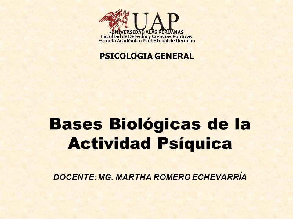 Bases Biológicas de la Actividad Psíquica DOCENTE: MG. MARTHA ROMERO ECHEVARRÍA UNIVERSIDAD ALAS PERUANAS Facultad de Derecho y Ciencias Políticas Esc
