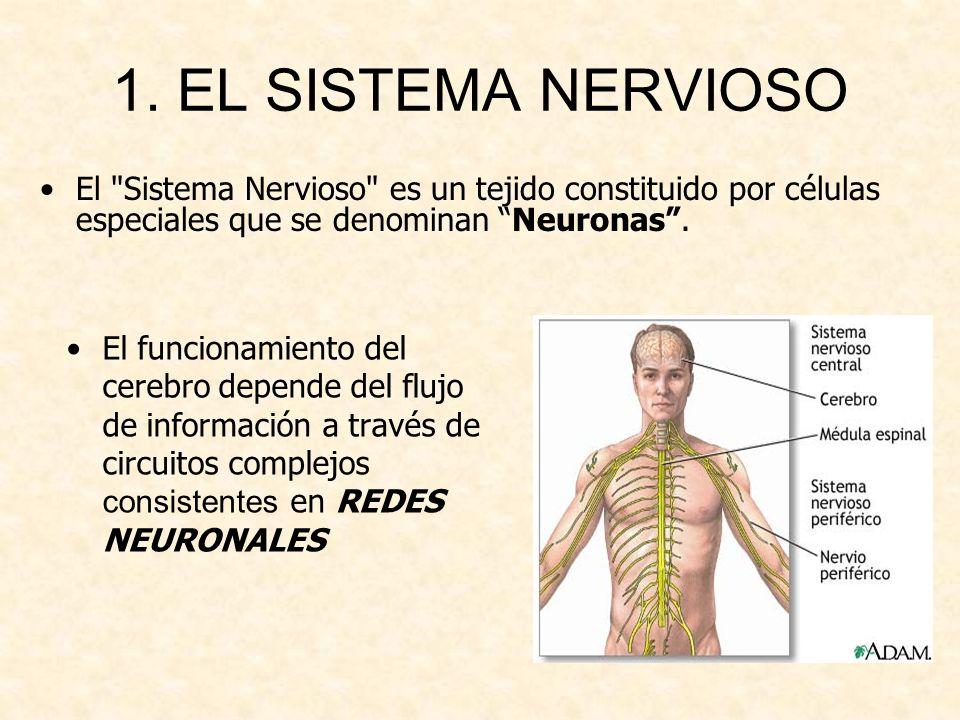 1. EL SISTEMA NERVIOSO El funcionamiento del cerebro depende del flujo de información a través de circuitos complejos consistentes en REDES NEURONALES