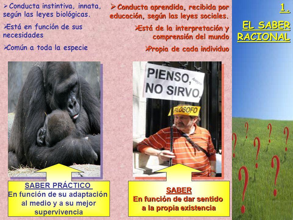 1. EL SABER RACIONAL Conducta instintiva, innata, según las leyes biológicas. Está en función de sus necesidades Común a toda la especie Conducta apre